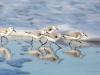 Sayre birds 1 copy