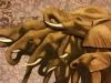 Collier image elephant herd
