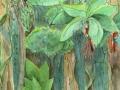 Osborne-Rainforest-Hide-and-Seek