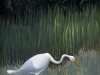 4widener_reflection_heron